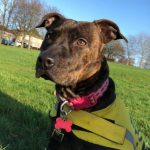 Brandy – REHOMED